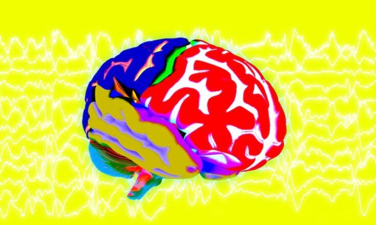 Gehirn rechenleisung
